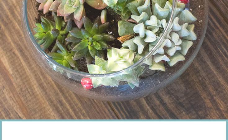 Make Your Own Succulent Terrarium Decor