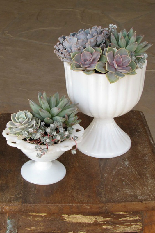 Make Your Own Succulent Terrarium Decor | Sense & Serendipity